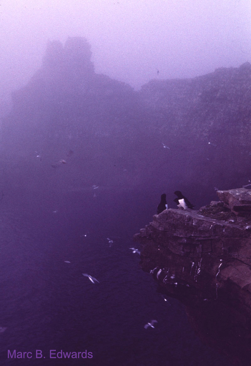 Bird cliff in the mists of Bear Island.
